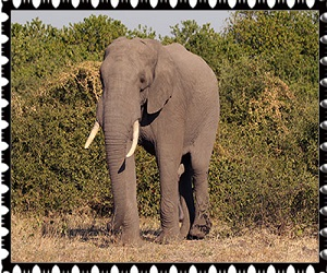 donate elephant